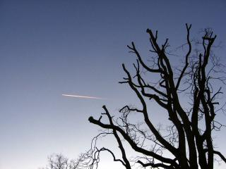 Jet contrail and pruned tree