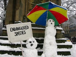 Snowmen have peepers