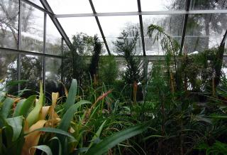 Greenhouse at Wolfson College