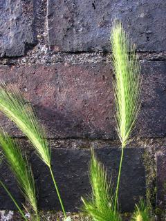 Grass and brick wall