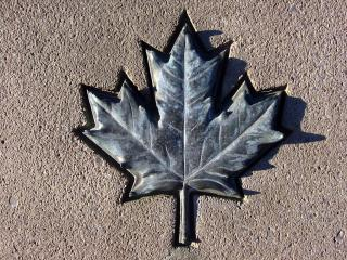 Bronze maple leaf