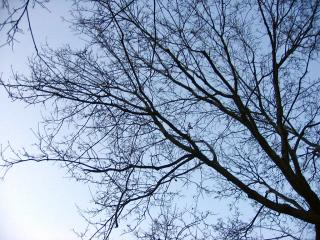 Bare branches and sky
