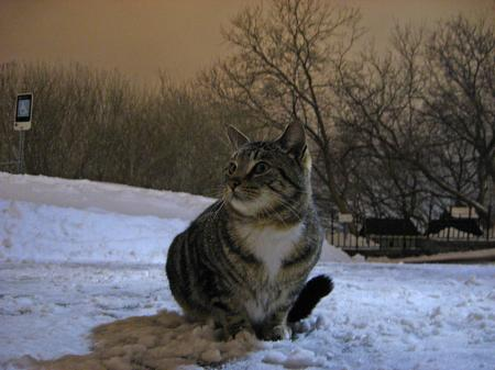 Cat on Parliament Hill