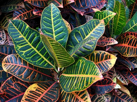 Colourful leaves, botanical garden