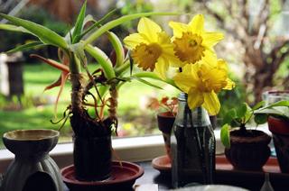 Flowers in a window, London