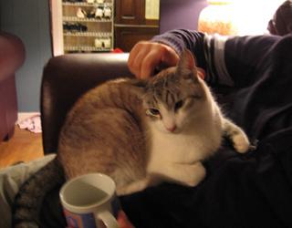Nick Ellan's cat Minko