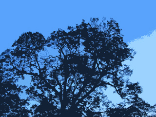 Tree and sky, abstract