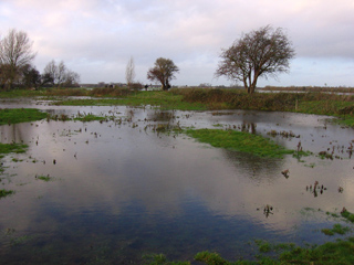 Flooded field near the Port Meadow