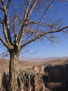 Tree and Ihlara Valley