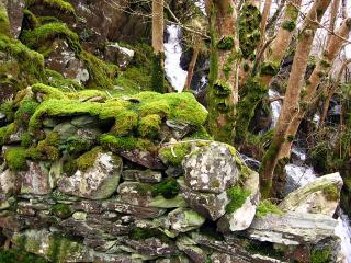 Welsh moss