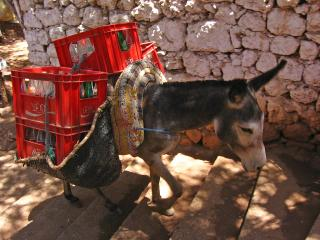 Donkey carrying bottles