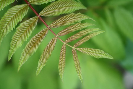 Narrow leaves