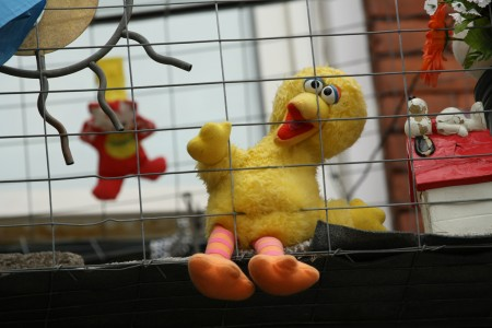 Big Bird in a cage