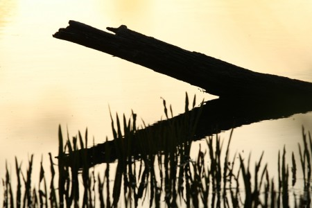 Log and reeds at sunset