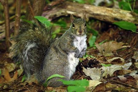 Squirrel near Mud Lake, Ottawa