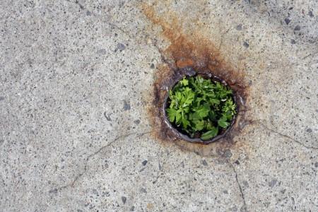 Plants, rust, concrete