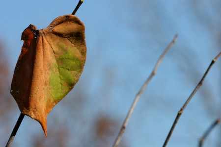 Leaf and branches