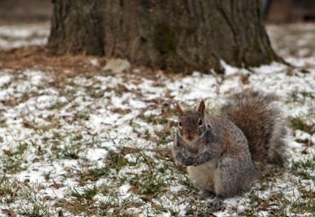 Squirrel in light snow
