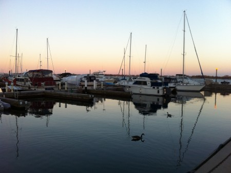 Sailboats and waterfowl