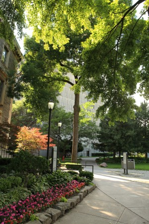Summer foliage, University of Toronto