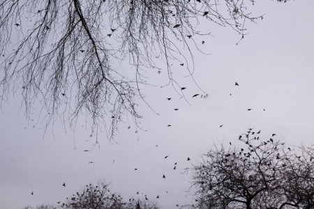 Birds flying from tree to tree