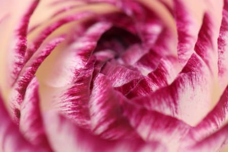 Petal spiral