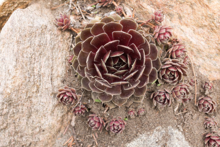 Spiky plant 2/2