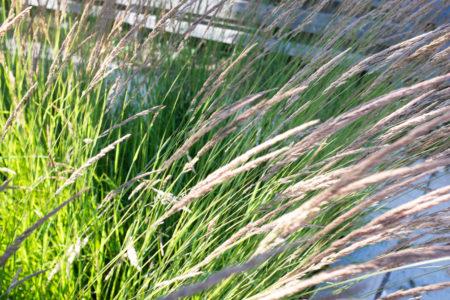 Grassburst