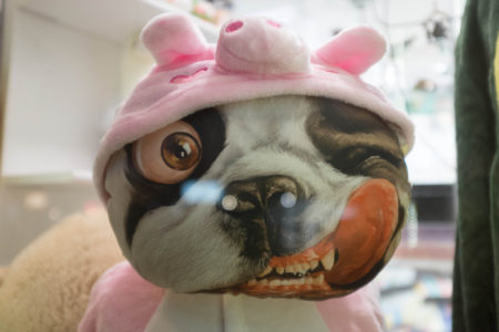 Deranged pig-dog