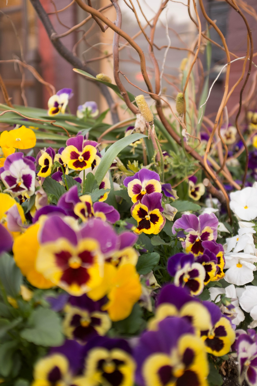 Late spring flowers mightylinksfo